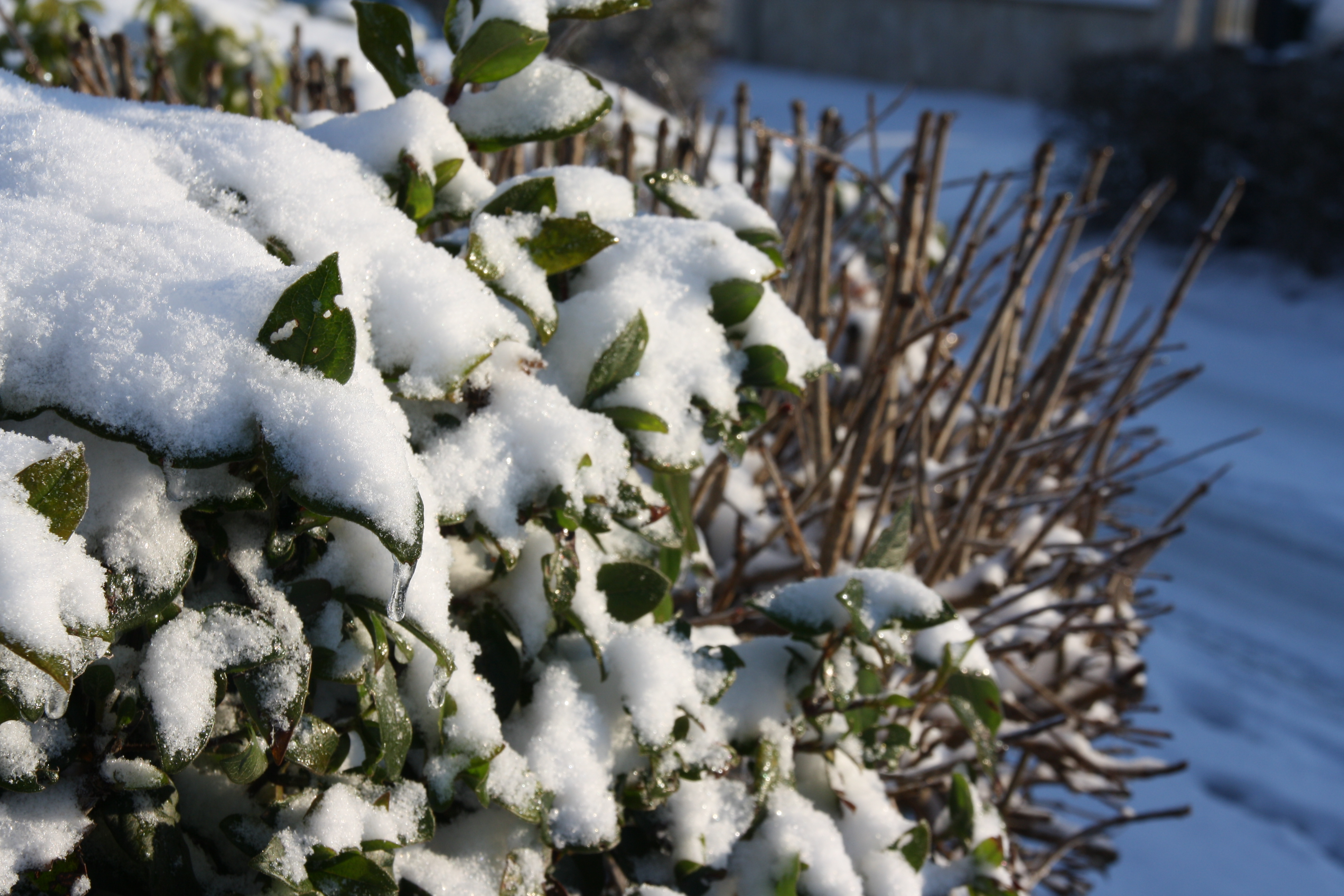 Foyer Grand Froid : Plan grand froid roissy en brie